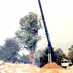 Piantumazione albero esemplare