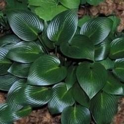 Devon green