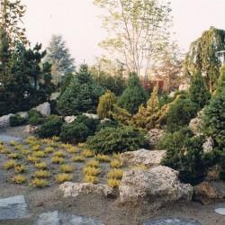 Giardino con conifere