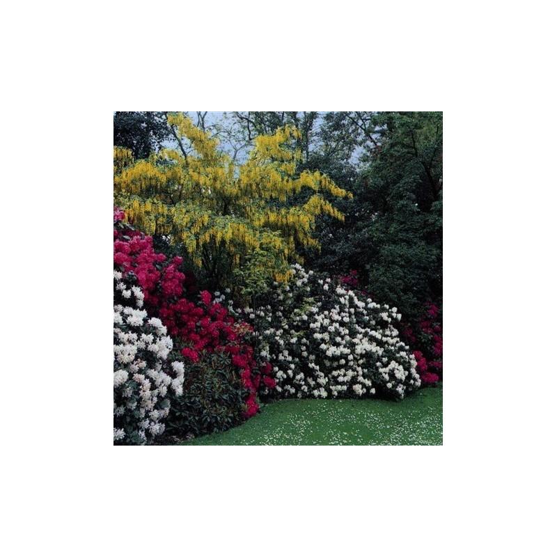 Giardino in collina con rododendri e maggio ciondolo