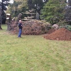 fagus Sylvatica Zlatia altezza circa 10 metri quintali 30 circa