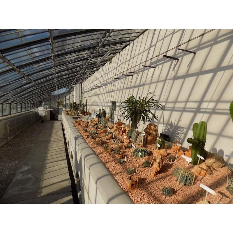Villa Litta Lainate Collezione Cactus