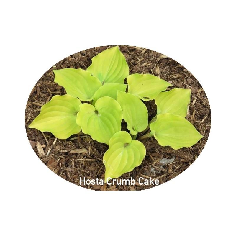 Hosta Crumb Cake
