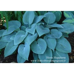 Hosta Happiness