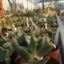 Collezioni Botaniche