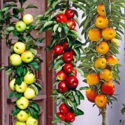 Malus Ballerina ® Flamenco